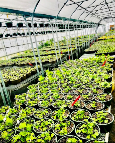 Greenhouse Production Scf5