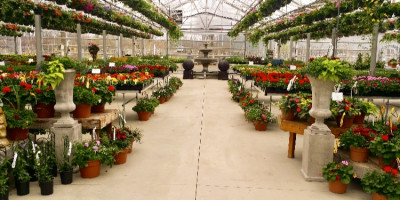 Greenhouse Scandia2