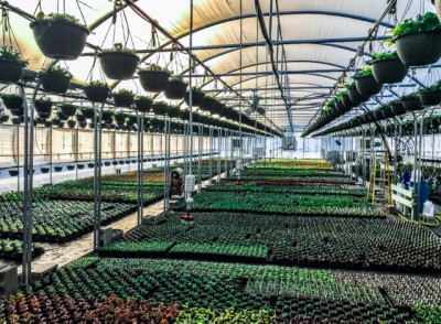 Greenhouse Production Scf4