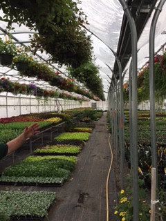 Greenhouse Hanging Baskets